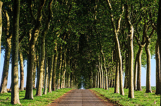 French Tree Lined Country Lane by Paul Warburton
