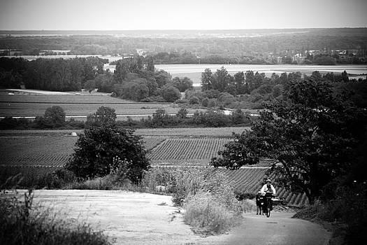 Jason Smith - French Vineyards