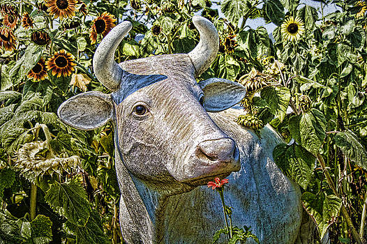 French White Cow by Carolyn Marchetti