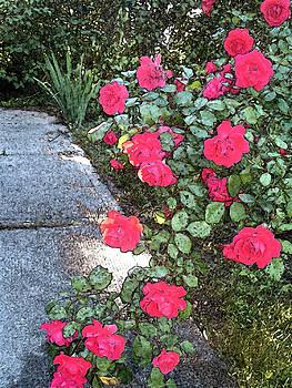 Fresco Roses by Karen Fowler