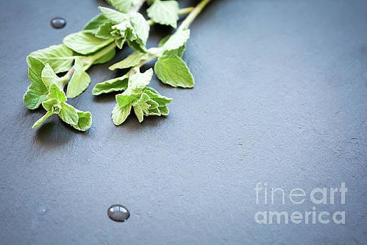 Fresh and green by Ekaterina Molchanova