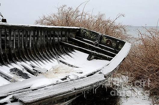Fresh Coat of Ice by Sandra Updyke