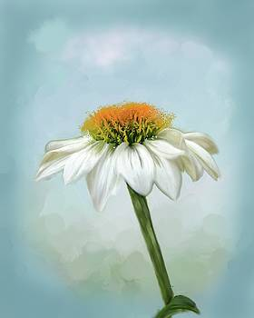 Fresh Cone Flower by Mary Timman