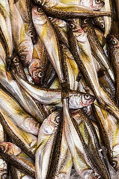 James BO Insogna - Fresh Fish Marketplace