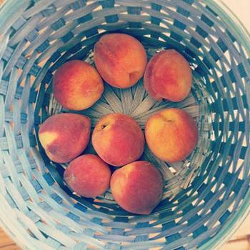 Fresh Fredericksburg Peaches! by Sophia Perez