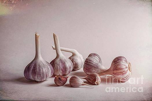 Fresh Garlic by Veikko Suikkanen