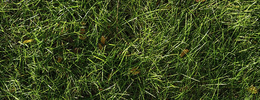 Fresh Lawn by Steve Gadomski