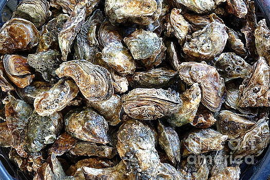 Fresh Oysters for Sale by Yali Shi