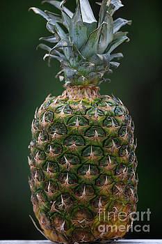 Dale Powell - Fresh Pineapple
