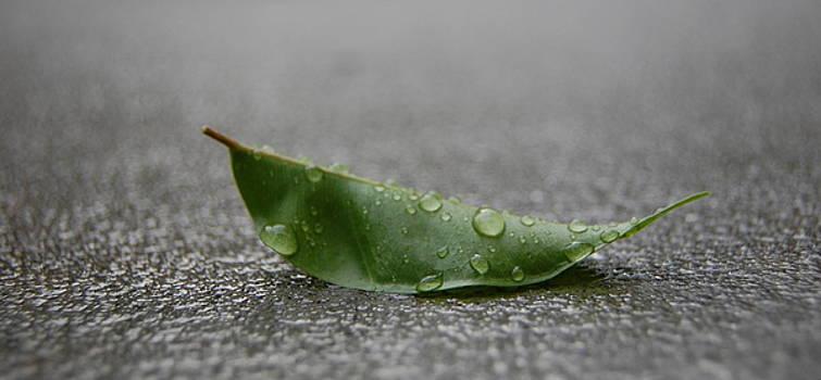 Fresh Rain by Alexa Gurney
