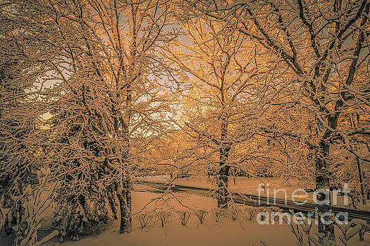 Fresh snow by Claudia M Photography