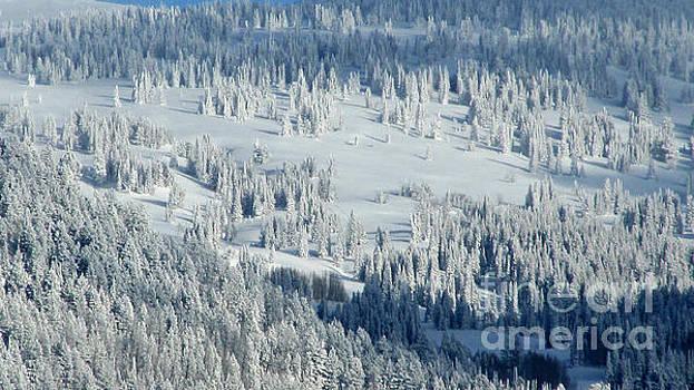 Fresh Snow by Janice Westerberg