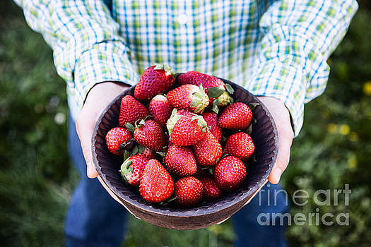 Mythja Photography - Fresh strawberries in farmer