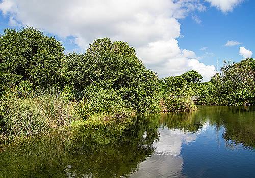 Fresh Water Pond in Key West by Bob Slitzan