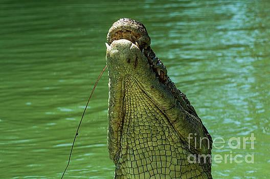 Freshwater Crocodile by Barbara Dudzinska