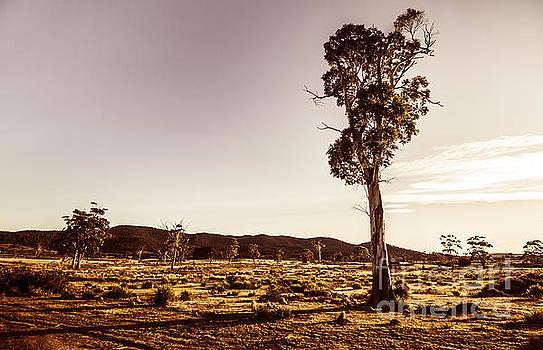 Freycinet bushland background by Jorgo Photography - Wall Art Gallery