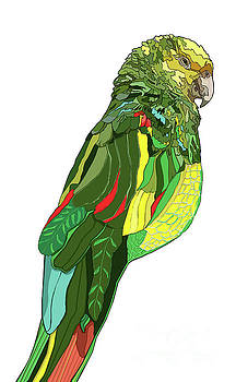 Frida's Parrot by Jamie Downs