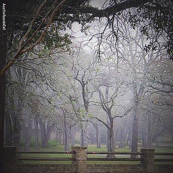 #friday Morning #fog Was #beautiful by Austin Tuxedo Cat