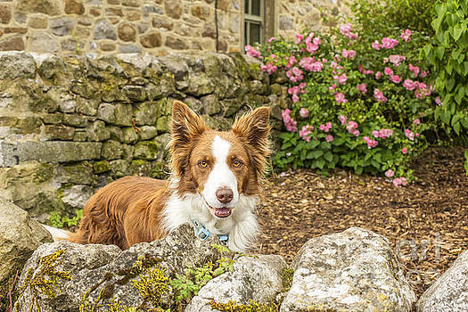 Patricia Hofmeester - Friendly dog in garden