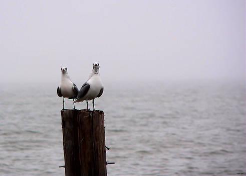 Friends In The Fog by Kathy K McClellan
