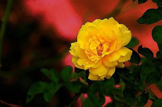 Friendship Rose by Jeffery Bennett