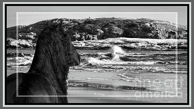 Sandra Huston - Friesian at the Sea in Black and White, Framed