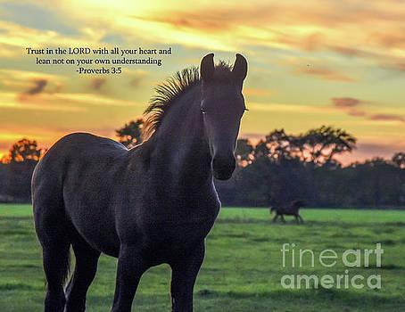 Friesian Foal Proverbs 3 5 by Lori Ann  Thwing