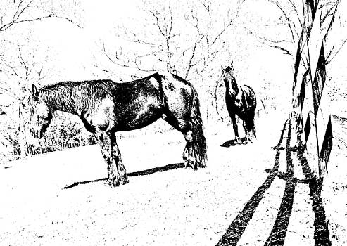 Friesian Litho by  Tina McGinley