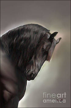 Corey Ford - Friesian Stallion