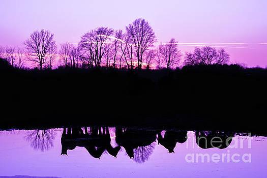 Friesian Sunset Purple by Lori Ann  Thwing