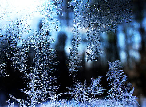 Frigid Blue Morning by Liz Allyn