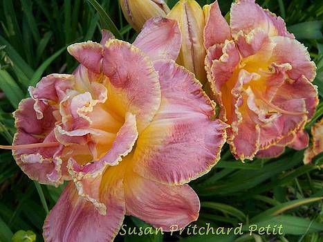 Frills by Sandy Collier