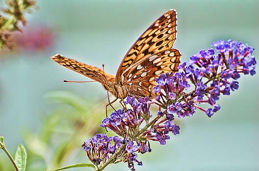 Edward Sobuta - Fritillary Butterfly 2