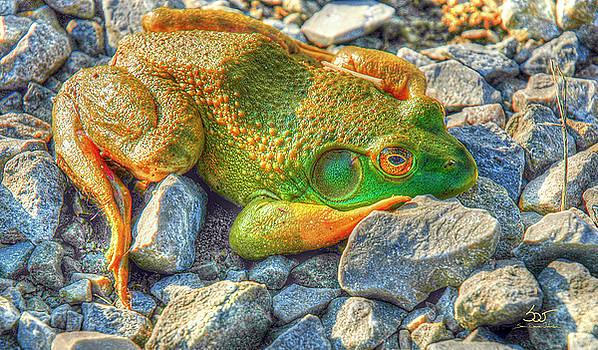 Sam Davis Johnson - Frog 42