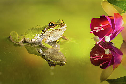 Frog and fuchsia with reflections by William Freebilly photography