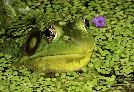 Frog and Purple Flower by Kelly Lucero