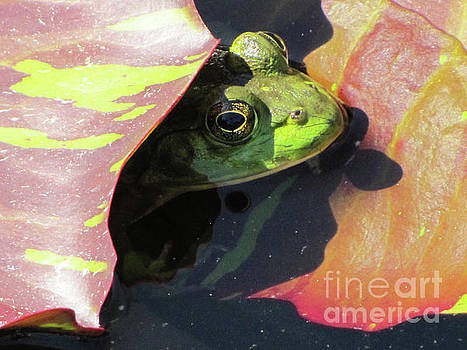 Frog Between Lily Pads by Ron Tackett