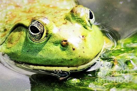 Nick Gustafson - Frog Close Up