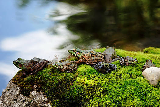 Debbie Oppermann - Frog Convention