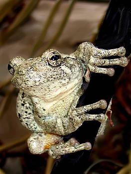 Diane Merkle - Frog