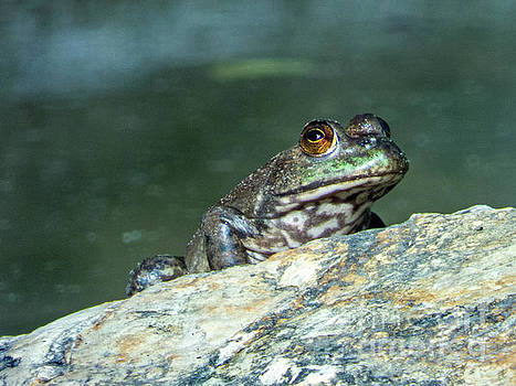 Frog by Dragonfleyes Photography and Creations