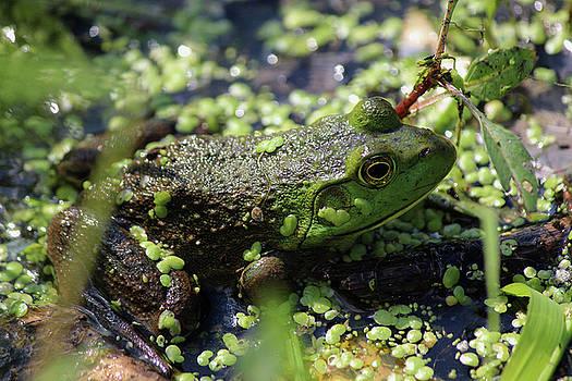 Frog in a Pond by Jake Danishevsky