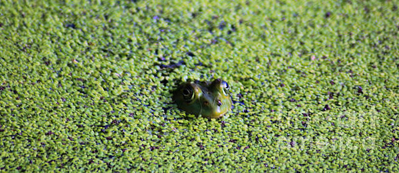 Nick Gustafson - Frog in Green