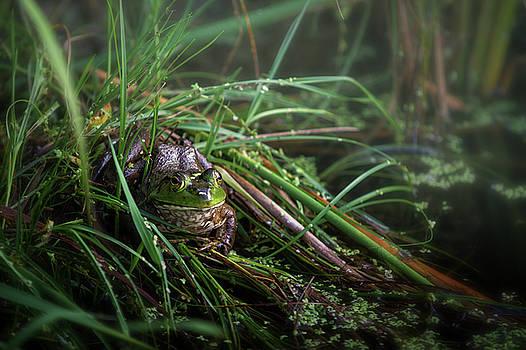 Frog in Hiding by Victoria Winningham