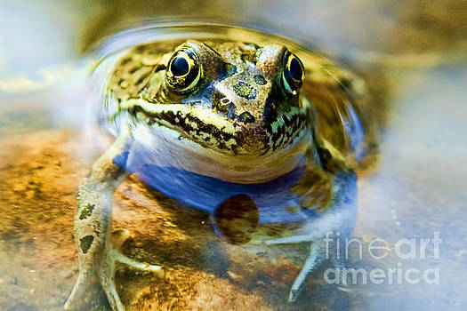Frog In Pond by Gary Beeler