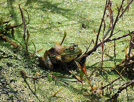 Frog in the Duckweed by Kerri Farley