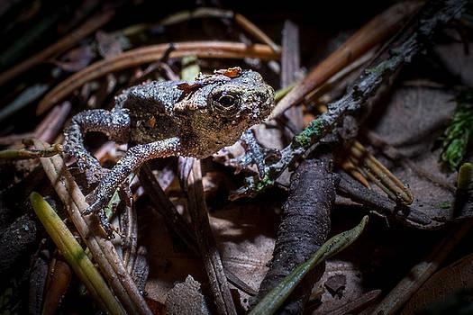 Frog by Jan Schwarz
