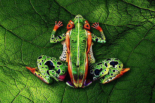 Frog Bodypainting Illusion by Johannes Stoetter