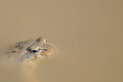 Frog by Maxim Politkin