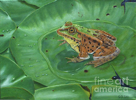 Frog On Lily Pad by Sid Ball